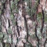 無料壁紙・テクスチャ素材:樹木と苔