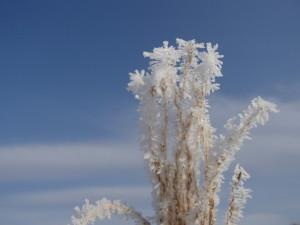 町中の樹氷02org