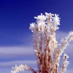 樹氷・霧氷の無料写真素材