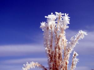 町中の樹氷02