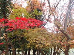 色彩豊かな紅葉