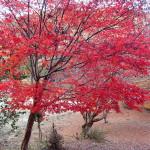 写真素材:紅葉(秋)